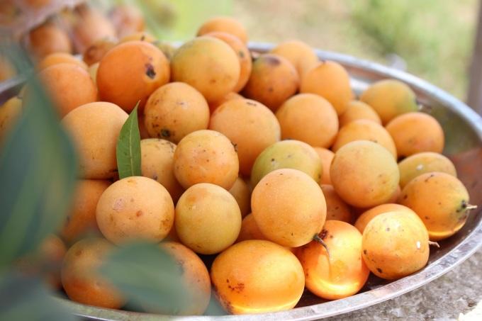 Thanh trà vốn là cây mọc hoang ở vùng Bảy Núi, An Giang, nhưng ngày nay đã được nhân giống, trồng rộng rãi ở Vĩnh Long, nhiều nhất là ở xã Đông Thành, huyện Bình Minh. Trái chín màu vàng tươi, nho nhỏ, có mùi thơm như xoài, cóc chín, vị chua ngọt, thường được bóc vỏ chấm muối ớt ăn trực tiếp hay làm nước giải khát, dầm đá hoặc làm mứt trái cây. Người miền Tây còn dùng thanh trà để nấu canh chua, trộn gỏi hoặc kho cá, tuy nhiên loại trái này có giá khá cao và chỉ có theo mùa từ tháng 12 đến tháng 4 dương lịch, nên người dân dùng me hoặc chanh thay thế. Ảnh: Huỳnh Nhi
