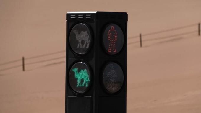 Đèn giao thông cho lạc đà đi vào hoạt động từ tháng 4. Giới chức địa phương khẳng định đây là đèn giao thông đầu tiên trên thế giới dành cho lạc đà. Ảnh: VCG
