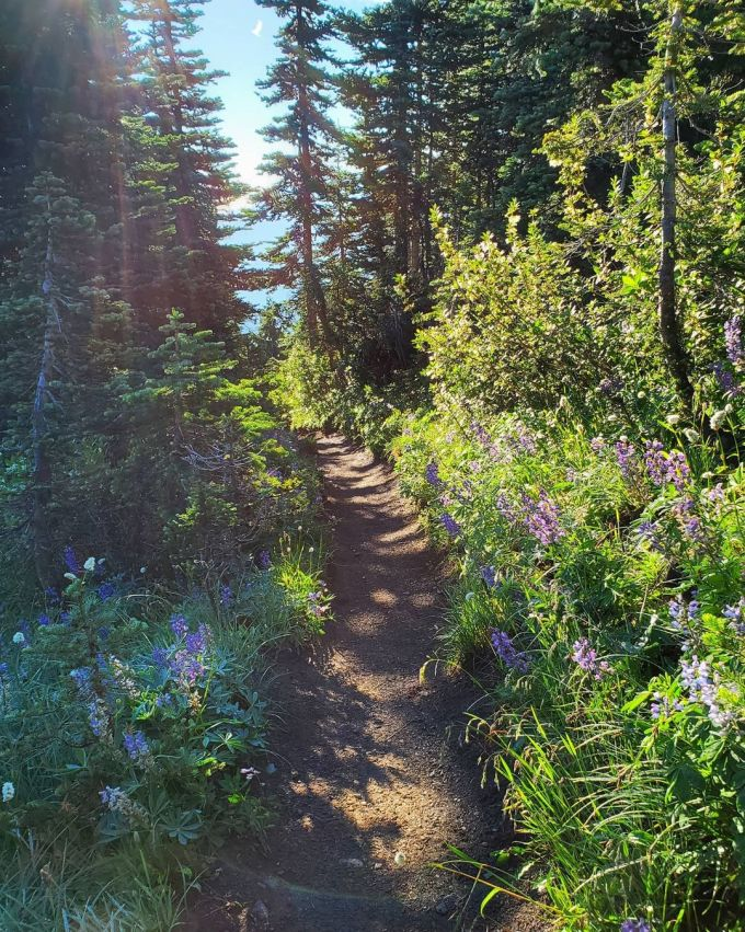 Olympic Peninsula Loop, USA: 300 miles, 798 pictures per mile  Looking to end right where you began? Drive the Olympic Peninsula Loop, which takes you around the perimeter of Olympic National Park. Make sure to stop along the way for plenty of photo ops.