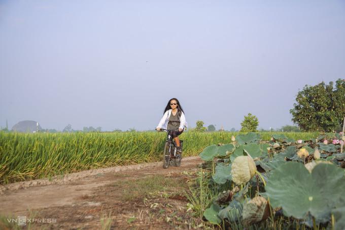 Du khách đạp xe ngắm những đồng lúa, đầm sen đang mùa nở rộ.