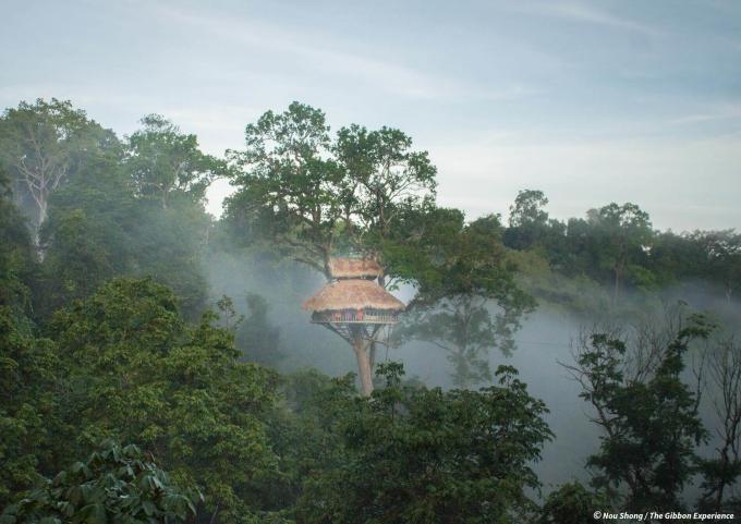 Tám ngôi nhà trên cây của Laos Gibbon Experience có tên trong top những ngôi nhà cao nhất thế giới, và cách duy nhất để đến đây là bằng zipline, theo CNN. The Gibbon Experience, một dự án bảo tồn dựa trên du lịch địa phương, mang đến cho du khách cơ hội khám phá những khu rừng, hoà mình vào thiên nhiên và văn hoá địa phương. Ảnh: Nou Shong