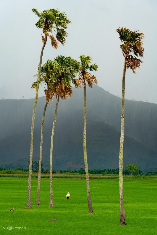 Người săn 'cảnh đẹp cô đơn' khắp Việt Nam - 10