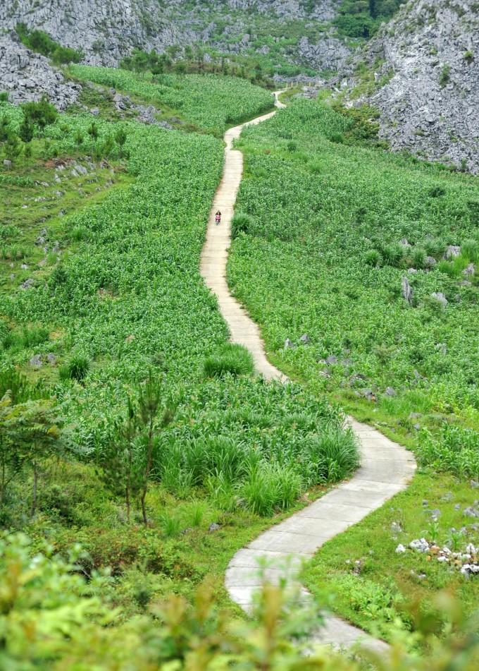 Mùa ngô xanh mướt trên cao nguyên đá Đồng Văn - 7
