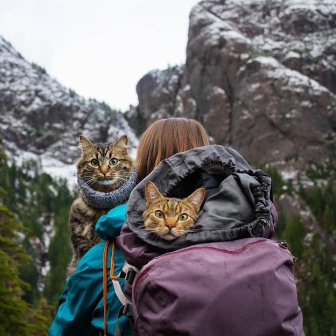 Hiện tại, Bolt và Keel đã về hưu và trang Instagram của chúng trở thành một cộng đồng dành cho các thú cưng thích phiêu lưu, kể những câu chuyện về những vật nuôi khác đang cùng chủ nhân của chúng trải nghiệm các hành trình.  Ảnh: @adventrapets/Instagram