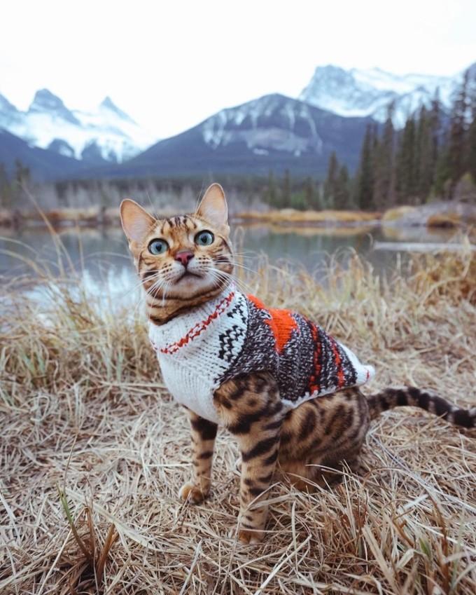 Cô mèo bengal mắt xanh này hiện có gần 2 triệu người theo dõi trên Instagram. Cùng với cô chủ Martina Gutfreund và một chú chó Husky, Suki khám phá những khu rừng, đồi núi và không ngại chinh phục những đỉnh núi mới. Suki chủ yếu đi du lịch ở Canada, song thi thoảng đến thăm các quốc gia khác như Italy, Luxembourg, Mexico, Mỹ... Các hoạt động ngoài trời yêu thích của Suki là đuổi bắt chim, nhảy đá, đi thuyền và chụp ảnh. Mèo Suki bạo dạn, quen thuộc với thiên nhiên hoang dã, không ngại tiếp cận với nước, mưa và nắng nóng và rất biết tạo dáng chụp ảnh. Suki có thể ngồi lâu ở một chỗ trong khi tôi đặt máy ảnh ở chế độ chụp liên tục với tốc độ màn trập cao, người chủ Marina tiết lộ bí quyết để có ảnh đẹp với thú cưng. Ngoài ra cô chia sẻ, Suki còn giúp đỡ cô trong việc kinh doanh: Suki là một con mèo thích phiêu lưu nhưng phần lớn thời gian rất lười biếng, không phải là một nhân viên giỏi. Ảnh: @sukiicat/Instagram