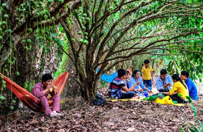 tham quan các vườn cây ăn trái, thưởng thức nhiều món ăn đặc sản của vùng đất U Minh.
