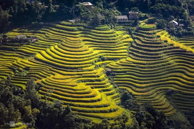 Ruộng bậc thang ở Hoàng Su Phì có tuổi đời khoảng 300 năm. Ảnh: Phạm Hoàng Cương.