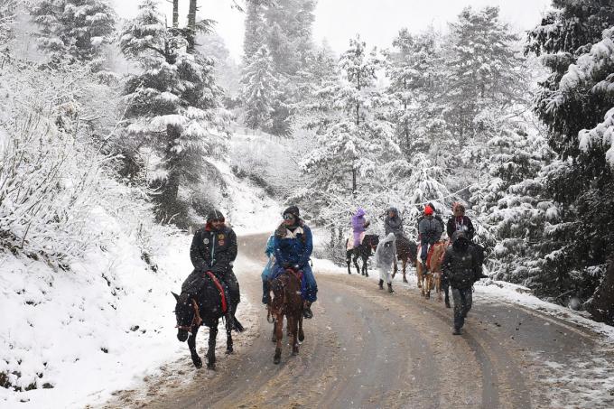 Đến với Shimla, du khách sẽ được trải nghiệm cưỡi ngựa qua những cánh rừng tuyết trước khi đi vào khu trượt tuyết. Ảnh: National Geographic
