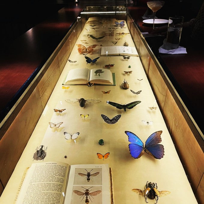 Not only displayed on the wall, a collection of butterflies and insects is also arranged right under the main table of the shop, accompanied by a collection of books on insect information.