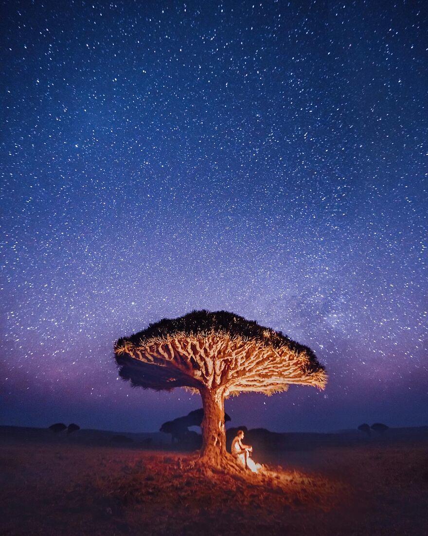 Hòn đảo của loài cây huyết rồng - Ảnh 2