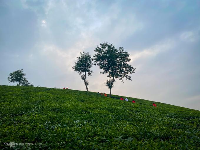 Du khách nối chân nhau đi bộ lên đỉnh đồi chè. Ảnh: Trung Nghĩa