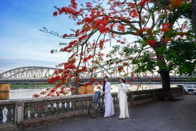 Phượng đỏ khoe sắc bên bờ sông Hương. Ảnh: Lê Huy Hoàng Hải.