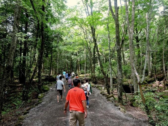 Aokigahara là khu rừng ở phía tây bắc chân núi Phú Sĩ, cách thủ đô Tokyo 100 km. Những năm gần đây, khu rừng trở thành địa điểm tự sát nổi tiếng nhất thế giới, sau hàng loạt vụ tự tử xảy ra. Do đó, nó còn có tên gọi khác là Rừng tự tử.  Chính quyền Nhật Bản đã đặt các biển báo đề dòng chữ: Cuộc sống này là món quà quý giá cha mẹ dành tăng cho bạn, kèm đường dây nóng hỗ trợ. Trong khu rừng rộng lớn còn có nhiều hang động chứa đầy băng. Nhiều nơi đã trở thành điểm tham quan nổi tiếng cho du khách. Tuy nhiên, nơi đây không phải là điểm lý tưởng cho các phượt thủ khi những tán cây xoắn chặt, và nền đất dung nham tạo ra không gian rùng rợn. Dù vậy, trước đại dịch, nơi đây vẫn đón nhiều du khách tò mò ghé thăm. Ảnh: Japan Travel