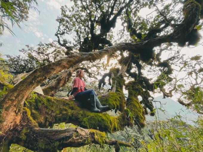 Đỉnh Khang Su Văn (3.012 m) còn có tên gọi khác là Phàn Liên San hay U Thái San, nằm ở xã Dào San, huyện Phong Thổ, tỉnh Lai Châu. Cung có tổng chiều dài khoảng 20 km được dân leo núi chinh phục lần đầu vào giữa năm 2015 và nhanh chóng trở thành điểm đến của dân trekking do đi qua khu rừng nguyên sinh với với những thân cây khổng lồ được rêu phủ kín.  Chuyến đi 2 ngày 1 đêm đến đỉnh Khang Su Văn còn đi qua cột mốc biên giới 79, cột mốc cao nhất toàn tuyến biên giới của Việt Nam. Ảnh: Hằng Bắp