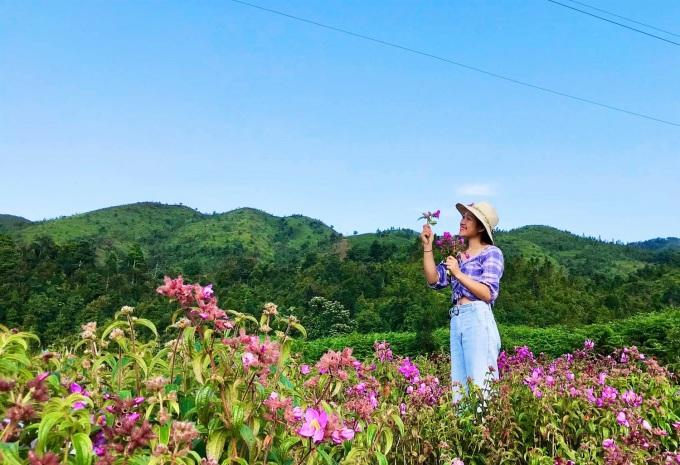 Hoa mua đua nở tại Bãi Bằng trong thôn Séo Mý Tỷ. Ảnh: Hướng Giáy Sa Pa