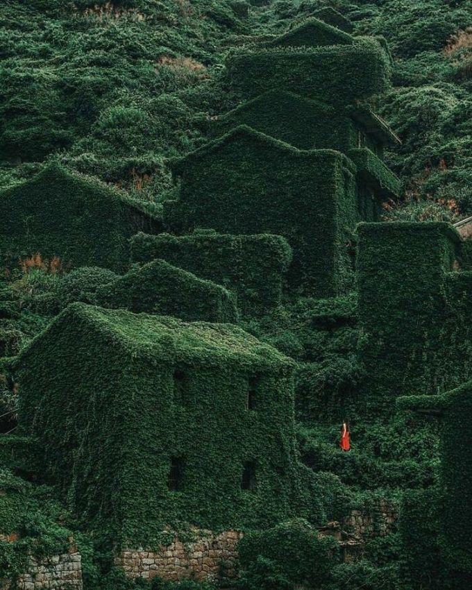 Trên ảnh là một làng chài bị bỏ hoang ở quần đảo Shengsi, Trung Quốc từ đầu những năm 1900. Sau khi mọi người chuyển di và bỏ lại những ngôi nhà, các cây leo nhanh chóng mọc lên, phủ kín ngôi làng và mang lại cho nơi đây một khung cảnh độc đáo. Có lẽ vì thế mà ngày nay, nơi này được nhiều du khách đổ xô đến để chụp ảnh. Ảnh: Abandoned Beauties/Bored Panda