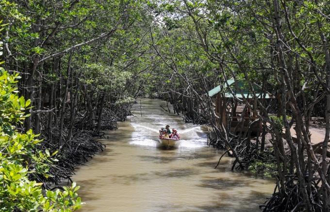 Dịch vụ ca nô đưa khách tham quan rừng ngập mặn Cần Giờ hồi tháng 7/2020. Ảnh: Quỳnh Trần