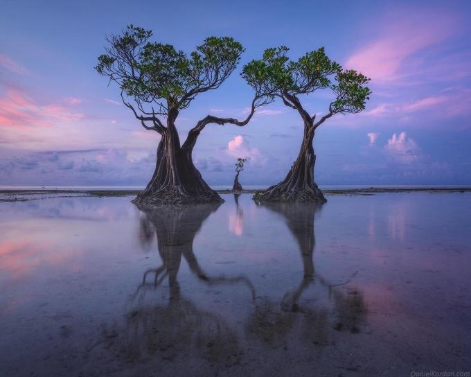 Hàng cây nhảy múa mọc dọc bãi biển. Ảnh: Dağınık kızlar/Facebook