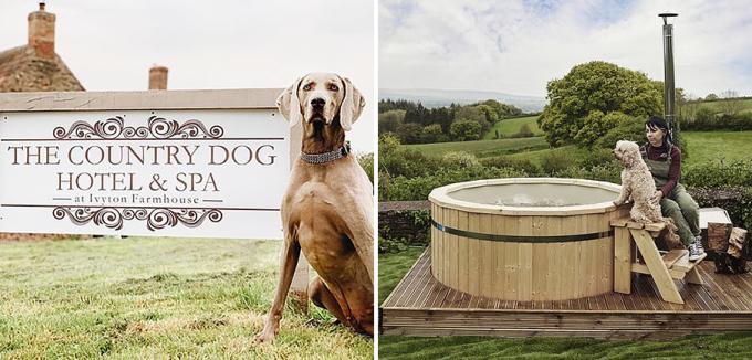 Khách sạn là nơi có nhiều nhu cầu gửi chó đến nghỉ dưỡng nhất nước. Ảnh: Country Dog Hotel